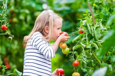 Junges Mädchen isst eine Tomate im Gewächshaus