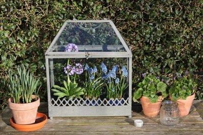 Kleines Gewächshaus mit Pflanzen